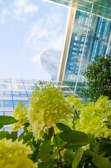 Ansicht von unten durch pelargonienblumen der glaswolkenkratzer des geschäftsgebiets von paris la defense gegen einen blauen bewölkten himmel