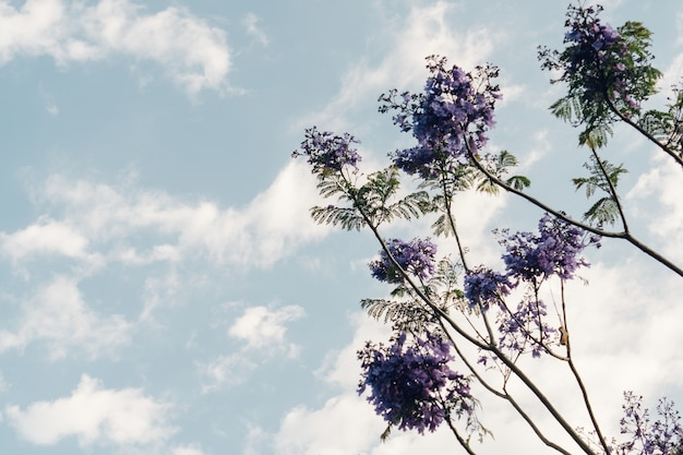 Ansicht von unten pflanze mit lila blüten