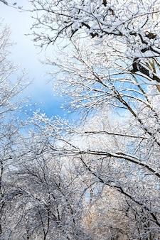 Ansicht von unten von den bäumen bedeckt mit schnee im wald