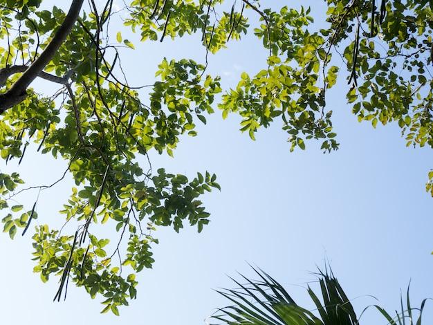 Ant-blick auf den baum. im schatten eines großen baumes mit einem hellen himmel