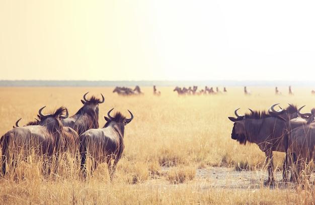 Antilope gnu im namibischen busch