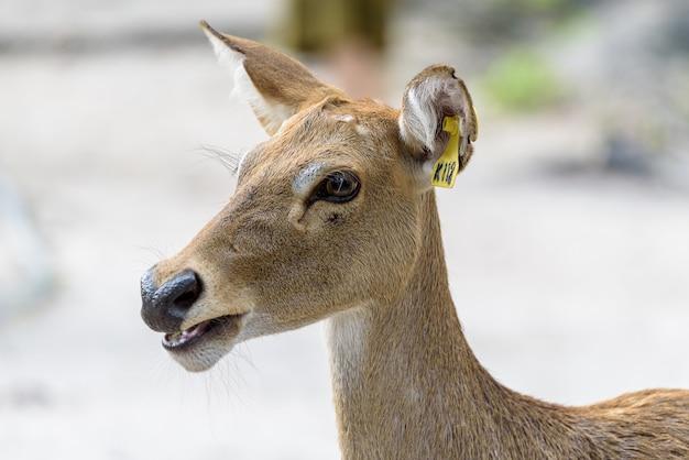 Antilopenkopf mit tageslicht