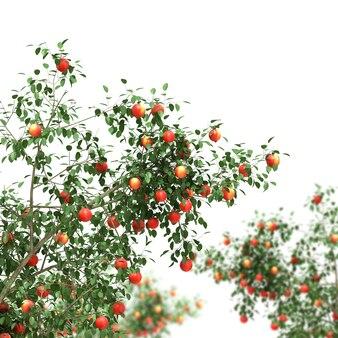 Apfelbaum voller früchte