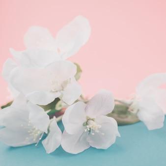 Apfelblüten über unscharfer farbe