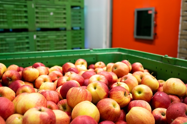 Apfelfrucht, die darauf wartet, in ein kühlhaus in der lebensmittelverarbeitungsfabrik gebracht zu werden.