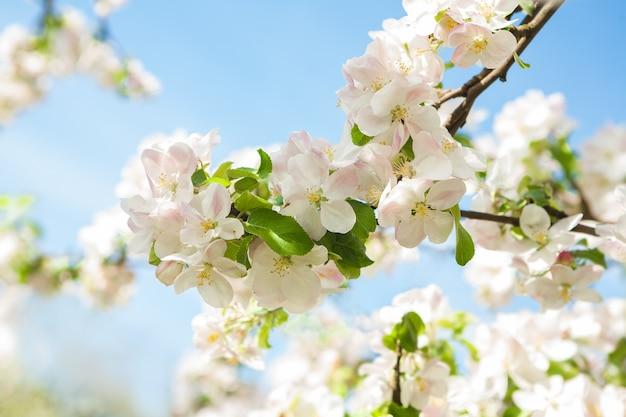 Appletree fliegt auf hintergrund des blauen himmels