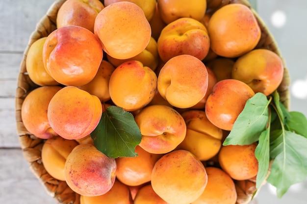 Aprikosen auf der tischgärtnerernte. selektiver fokus. lebensmittel.
