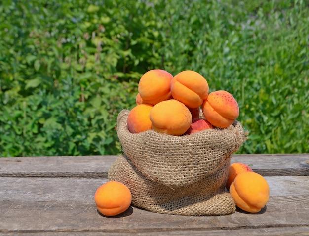 Aprikosen in der tasche