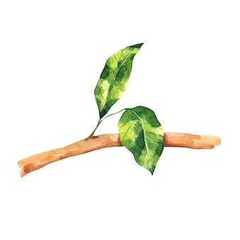 Aquarell ast mit grünen blättern clipart laub zweig clipart