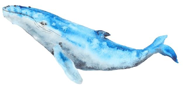 Aquarell blauwal