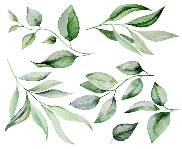 Aquarell botanische grüne blätter illustration set illustration isoliert