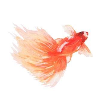 Aquarell eines goldenen fisches