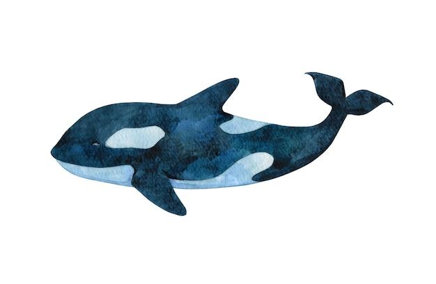 Aquarell grampus clipart isoliert auf weißem hintergrund handgezeichnete schwarze orca illustration helle killerwal karte poster aufkleber designelement