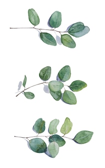 Aquarell handbemalter silberner eukalyptus. grüne abbildung.