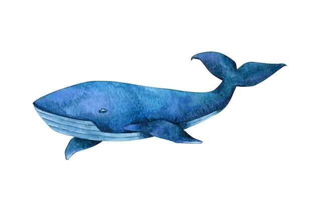Aquarell handgezeichnete blauwal clipart isoliert auf weißem hintergrund. heller fisch, säugetierillustration. türkiswal clipart für karte, aufkleber, poster, design und dekoration.
