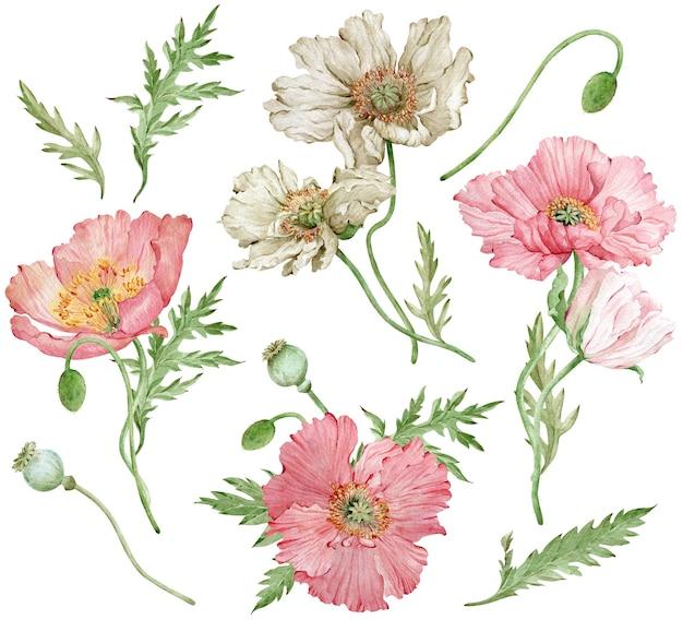 Aquarell handgezeichnetes set aus island rosa und weißen mohnblumen und grünen blättern. schöne blumen