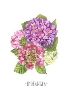 Aquarell hortensie zusammensetzung bouquet