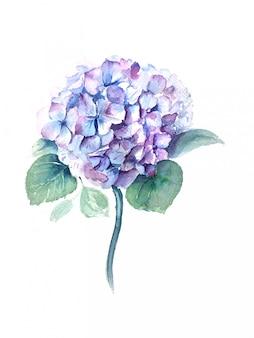 Aquarell-hortensienblume mit weinleseillustration der grünen blätter