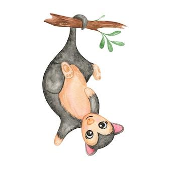 Aquarell opossum australisches opossum isoliert, niedliche tiere kinderzimmer dekor