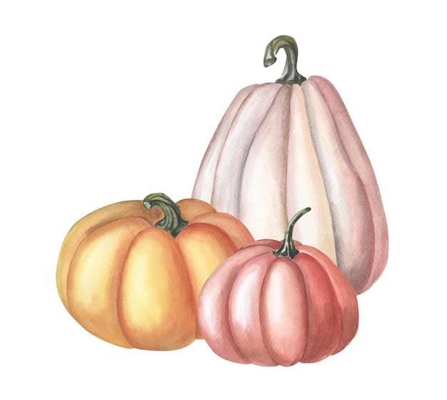 Aquarell roter kürbis. aquarellillustration auf weißem hintergrund. gruppe von gemüse. herbsternte. frisches vegetarisches essen. thanksgiving-feiertag. isolierte handgezeichnete skizze.