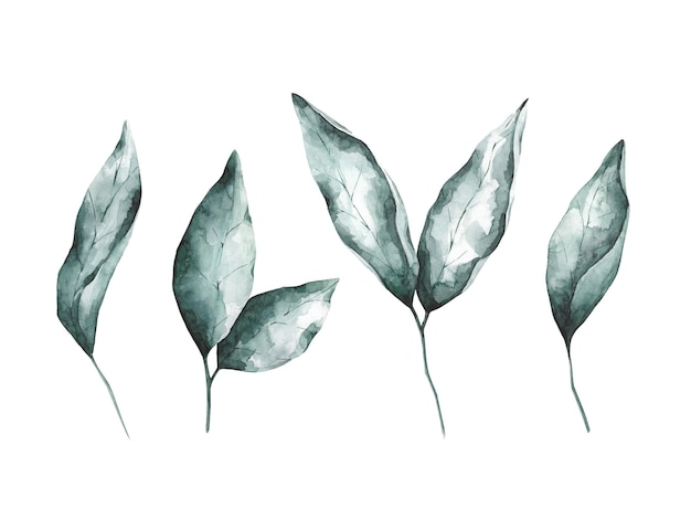 Aquarell smaragdgrün verlässt sammlung isoliert auf weißem hintergrund. vier botanische gestaltungselemente. graue und grüne blumencliparts eingestellt.