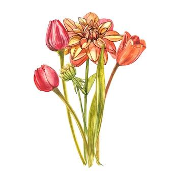 Aquarell tulpen. wildblumensatz lokalisiert auf weiß. botanische aquarellillustration, orange tulpenstrauß, rustikale blumen.