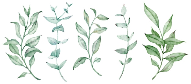 Aquarellgrün gesetzt mit eukalyptuszweigen