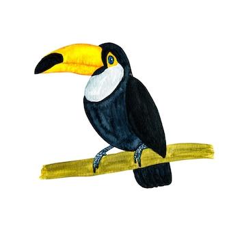Aquarellillustration des tropischen vogeltukans lokalisiert auf weißem hintergrund