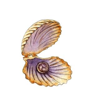 Aquarellillustration einer offenen muschel mit einer perle eine muschelmuschel mit einem juwel im inneren