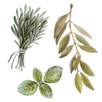 Aquarellillustration eingestellt mit blättern, frucht und olivenöl. öl und aromatische kräuter