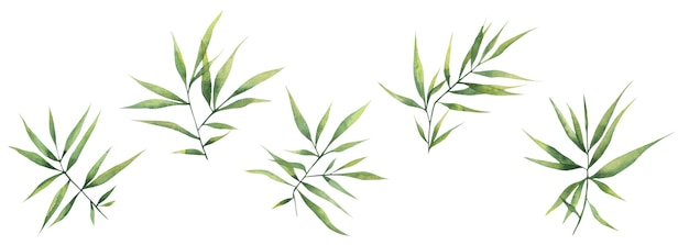 Aquarellillustration mit grünen bambusblättern lokalisierte elemente auf einem weißen hintergrund