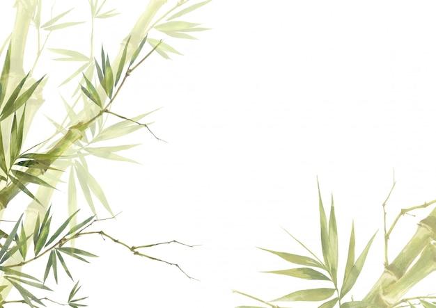 Aquarellillustrationsmalerei des bambusses verlässt hintergrund