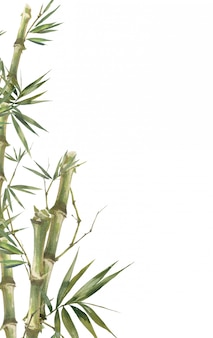 Aquarellillustrationsmalerei von bambusblättern