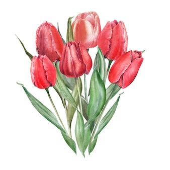 Aquarellkomposition mit eleganten roten tulpen. knospen, blüten und blätter