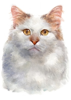 Aquarellmalerei des türkischen van cat