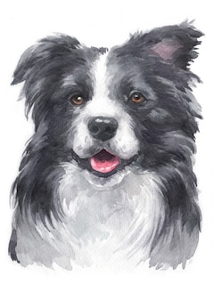 Aquarellmalerei von border collie
