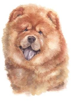 Aquarellmalerei von chow chow hund
