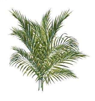 Aquarellmalerei von den kokosnusspalmblättern lokalisiert auf weiß