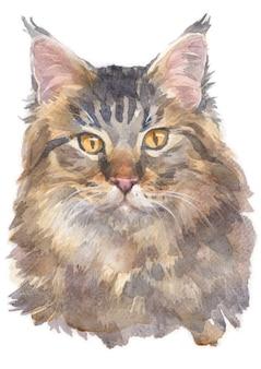 Aquarellmalerei von maine coon cat