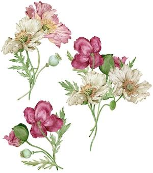 Aquarellmohnblumensträuße mit weißen, purpurroten und rosafarbenen blumen lokalisiert auf dem weißen hintergrund. wunderbare blumen. Premium Fotos