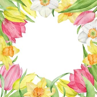 Aquarellquadratrahmen der ersten frühlingsblumen lokalisiert auf dem weißen hintergrund. gelbe und rosa tulpen und narzissen. osterrahmen.