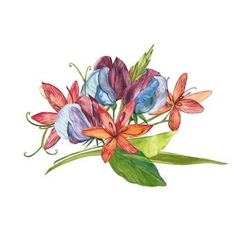Aquarellsatz edelwickenblumen und -blätter, hand gezeichnete blumenillustration lokalisierte sammlungsgarten und wildes kraut, blumen, niederlassungen. botanische kunst.