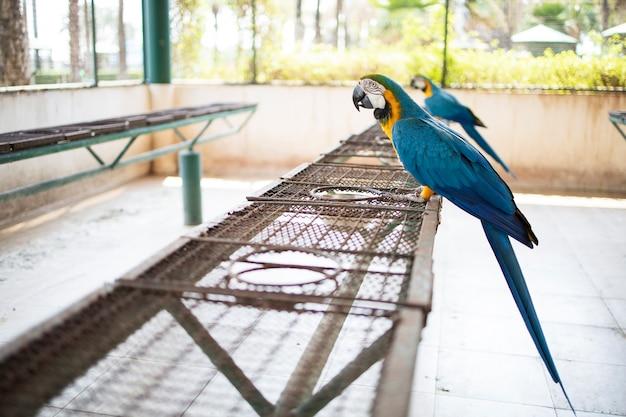 Ara papagei haustier im großen käfigzoo