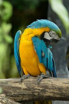 Ara-vogel sitzt auf dem baum