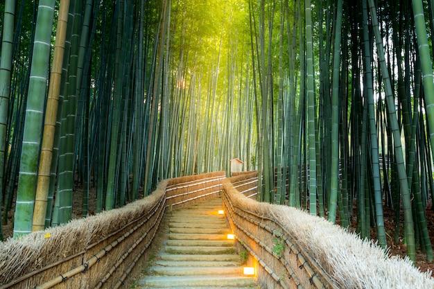 Arashiyama-bambuswald