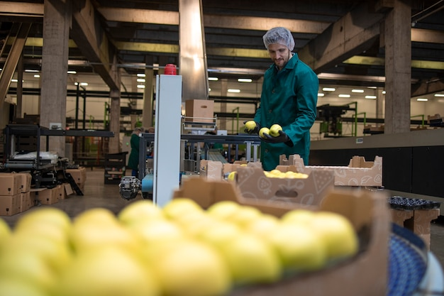 Arbeiten in einer biofabrik, die grüne äpfel sortiert und förderbänder zum kühlhaus transportiert.