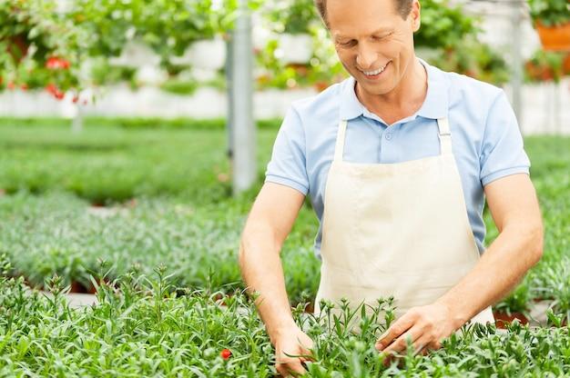 Arbeiten in grüner umgebung. porträt eines mannes in schürze, der sich um pflanzen kümmert, während er im gewächshaus steht