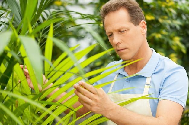 Arbeiten mit pflanzen. schöner reifer mann in uniform, der in der nähe der topfpflanzen arbeitet