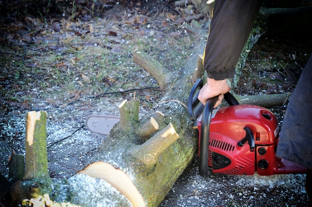 Arbeiter, der holz mit einer kettensäge schneidet.