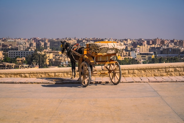 Arbeiter mit pferden an den pyramiden von gizeh, dem ältesten grabdenkmal der welt. in der stadt kairo, ägypten